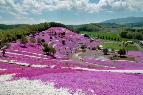 We're Tickled Pink by These Mesmerizing Flower Fields