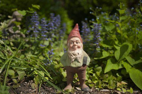 image - Gnome Garden
