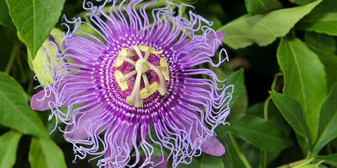 15 of the Craziest-Looking Flowers From Near and Far