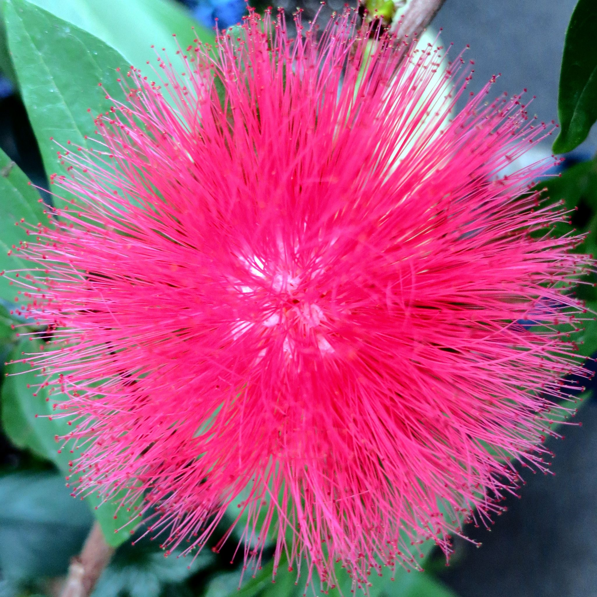 Unusual Flowers 15 Crazy Looking Flowers From Around The World