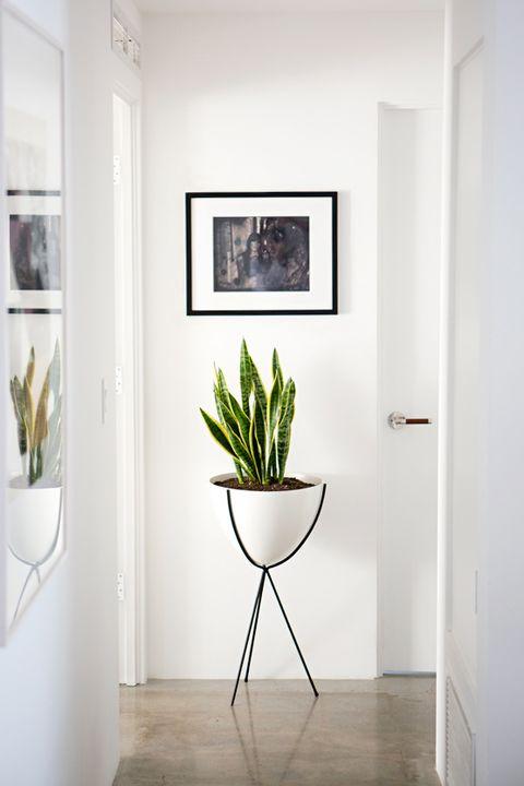30 Best Indoor Plants Good Inside Plants For Small Space Gardening