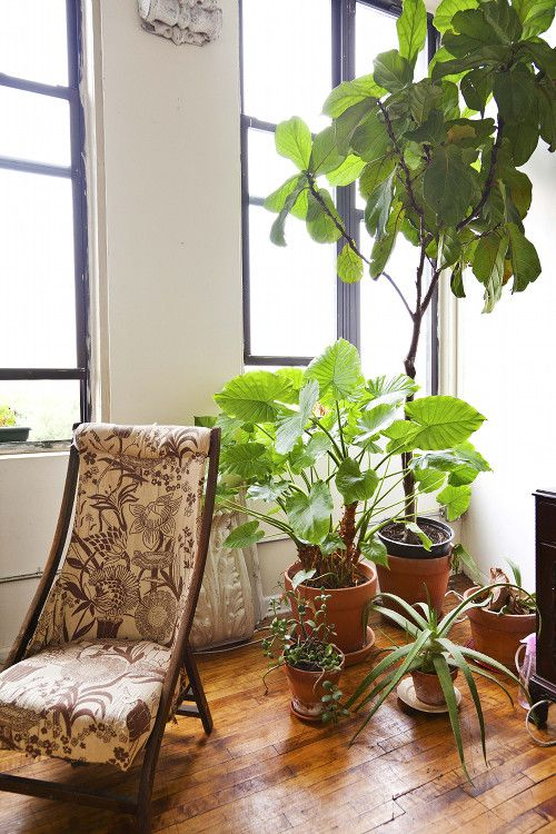 20 Best Indoor Plants - Good Inside Plants for Small Space Gardening