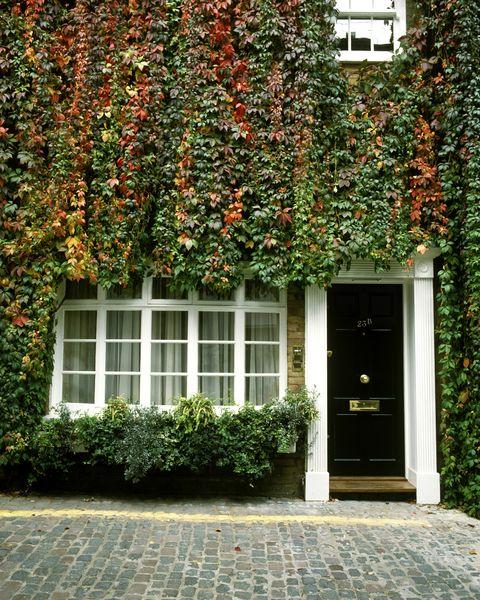 entryway vines