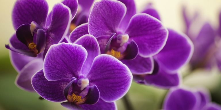 Things You Didn T Know About Orchids Orchid Fun Facts