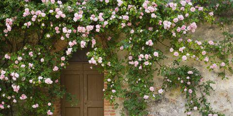 rose entrance