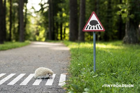 These Mini Road Signs Help Animals Cross The Street