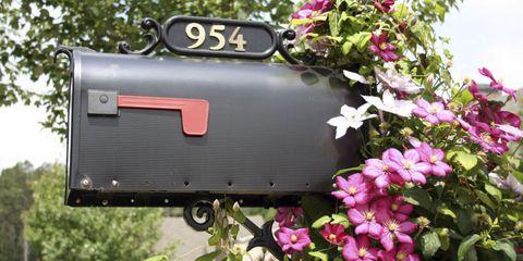 Mailbox Clematis Pink