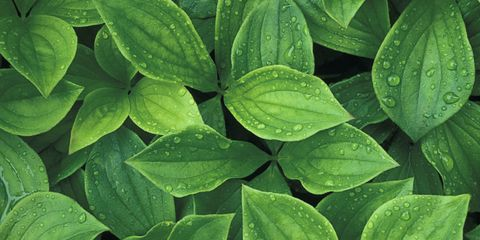 6 Things Your Plant's Leaves Are Trying to Tell You