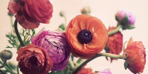 Petal, Flower, Pink, Purple, Magenta, Flowering plant, Botany, Plant stem, Violet, Produce,