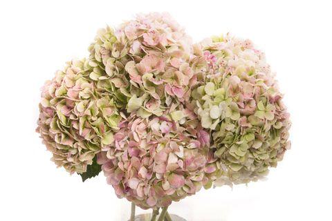 Petal, Flower, Pink, Cut flowers, Flowering plant, Flower Arranging, Lavender, Bouquet, Floral design, Artificial flower,