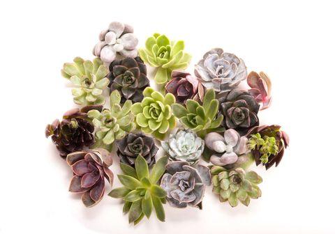 Petal, Flower, Purple, Pink, Lavender, Cut flowers, Violet, Bouquet, Flowering plant, Flower Arranging,