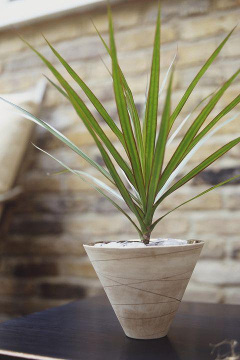 30 Houseplants That Can Survive Low Light Best Indoor