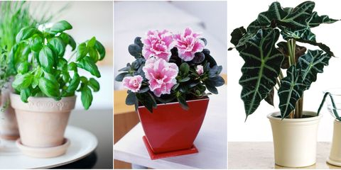 Flowerpot, Plant, Flower, Leaf, Interior design, Petal, Houseplant, Vase, Flowering plant, Annual plant,