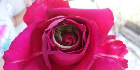 Woman Finds the Sweetest Little Lizard Hiding in a Rose