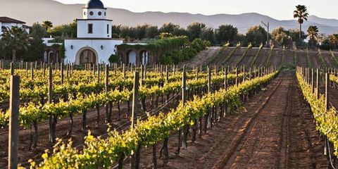 7 Places for Your Travel Bucket List if You Love Wine