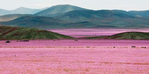 This Is What Happens After It Rains on One of the Driest Places on Earth