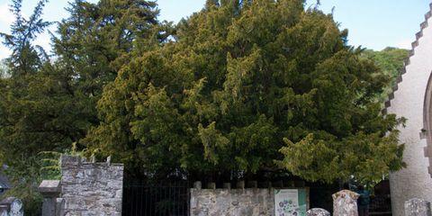 Woody plant, Stone wall, Evergreen,