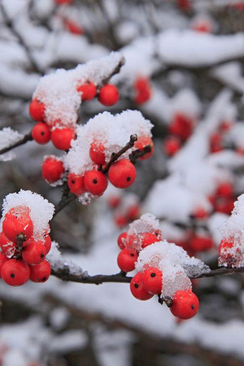 15 Best Plants That Bloom In Winter Flowers That Develop