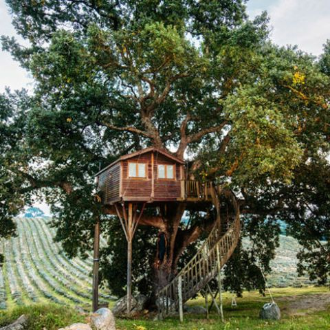 33 Incredible Treehouses You Can Rent for Your Next Summer Trip