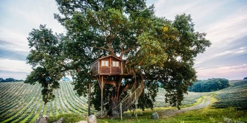 25 Amazing Treehouses You Can Actually Rent