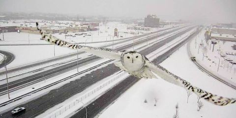 This Exquisite Photo of a Snowy Owl Was a Total Accident
