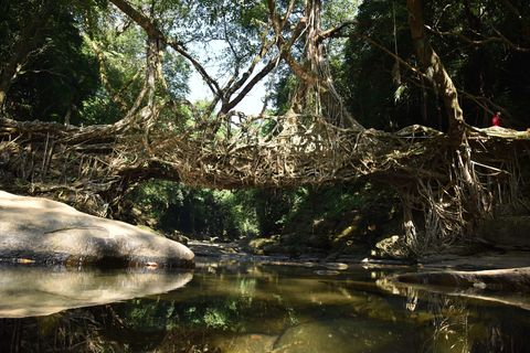 These Living Bridges Are Seriously Breathtaking