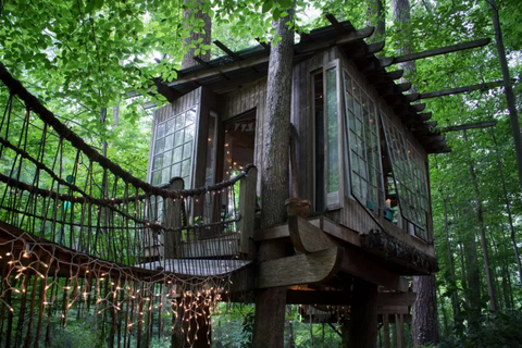 Wood, Tree house, Forest, Iron, Jungle, Trunk, Woodland, Old-growth forest, Log cabin, Temperate broadleaf and mixed forest,