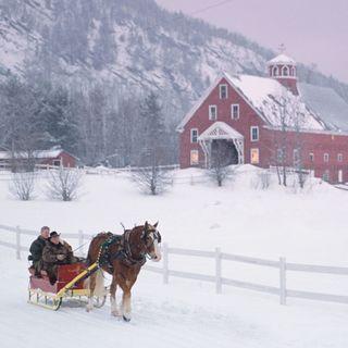 Snow, Winter, Skijoring, Sled dog, Vehicle, Dog sled, Mushing, Canidae, Horse, Recreation,