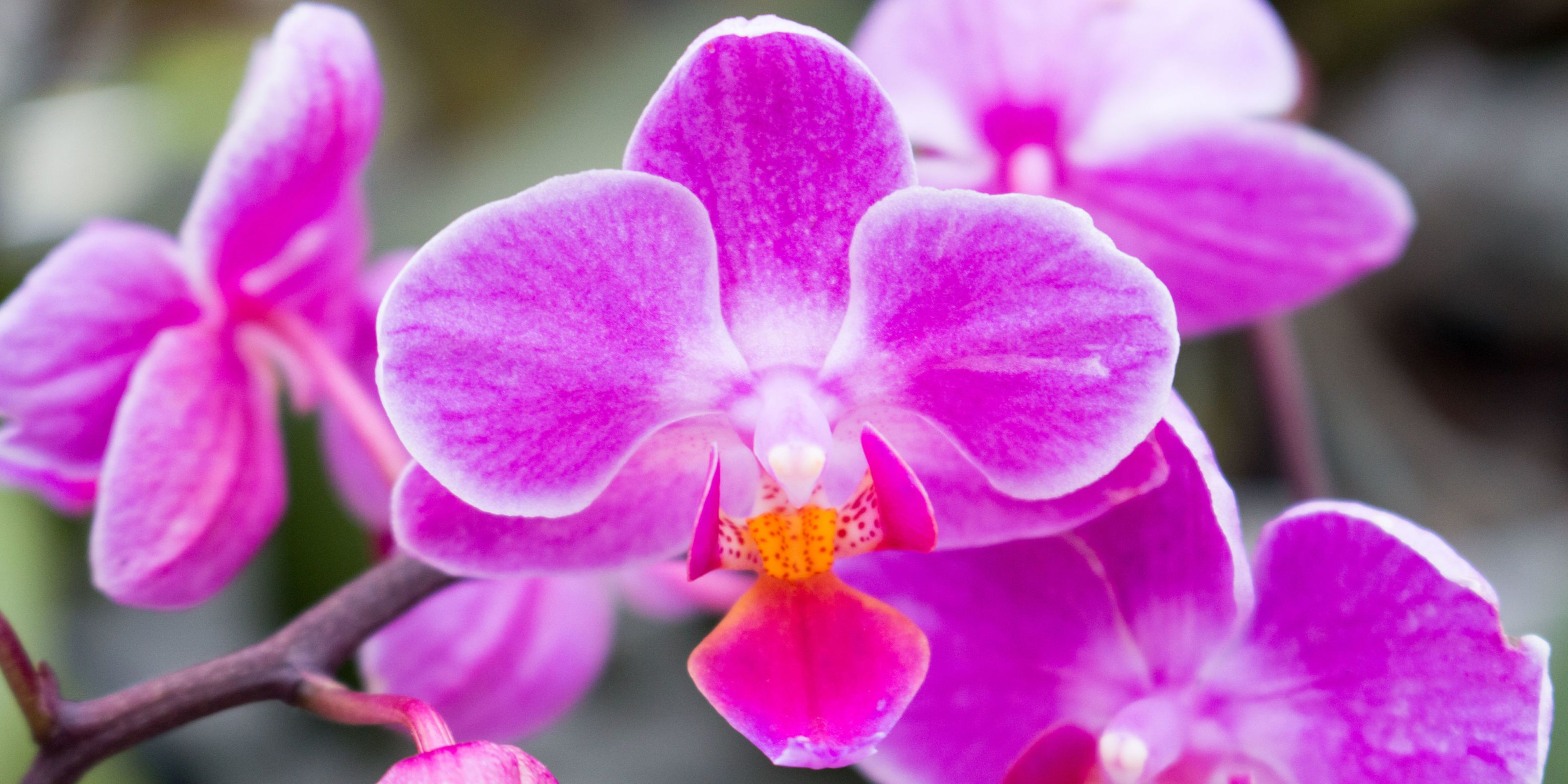 11 Swoon-Worthy Photos from the New York Botanical Garden Orchid Show
