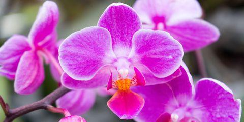 Orchidelirum New York Botanical Garden Orchid Show 2016