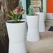 Plant, Flowerpot, Petal, Interior design, Terrestrial plant, Flowering plant, Houseplant, Shrub, Design, Vase,