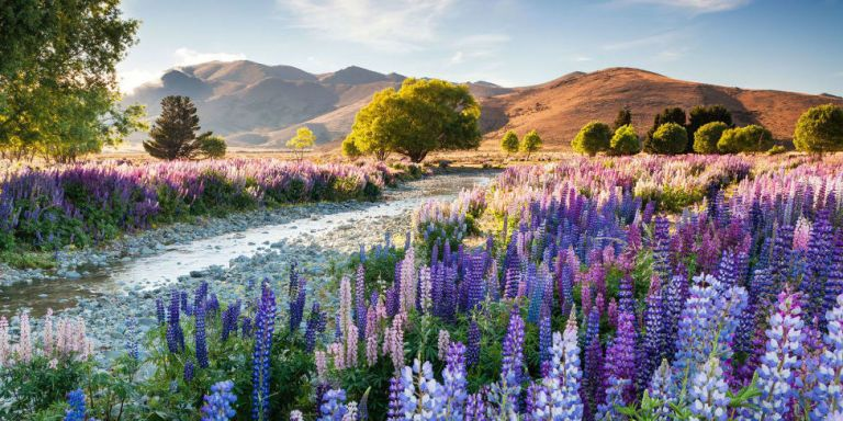 10 of the Most Beautiful Gardens You Will Ever See