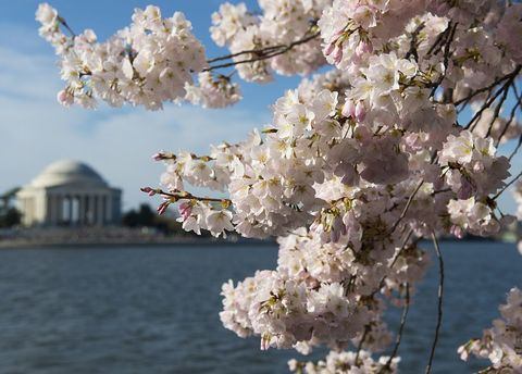 Daytime, Branch, Petal, Flower, Blossom, Twig, Spring, Dome, Cherry blossom, Prunus,