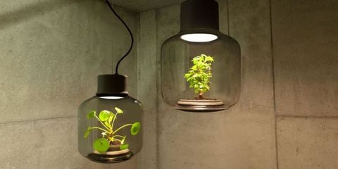 These Lamps Let You Grow Plants in Dark, Windowless Rooms