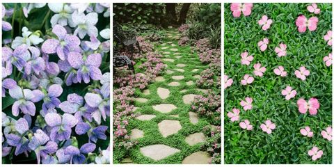 How to Find the Right Ground Cover Perennials for Your Yard