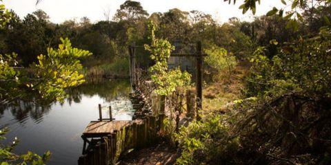 Vegetation, Plant, Natural landscape, Nature reserve, Pond, Reservoir, Lake, Wetland, Shrub, Loch,
