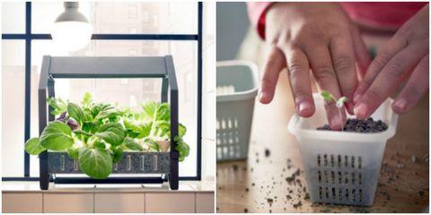 Indoor Gardening Kit Ikea indoor gardening kit kryddavxer series ikea workwithnaturefo