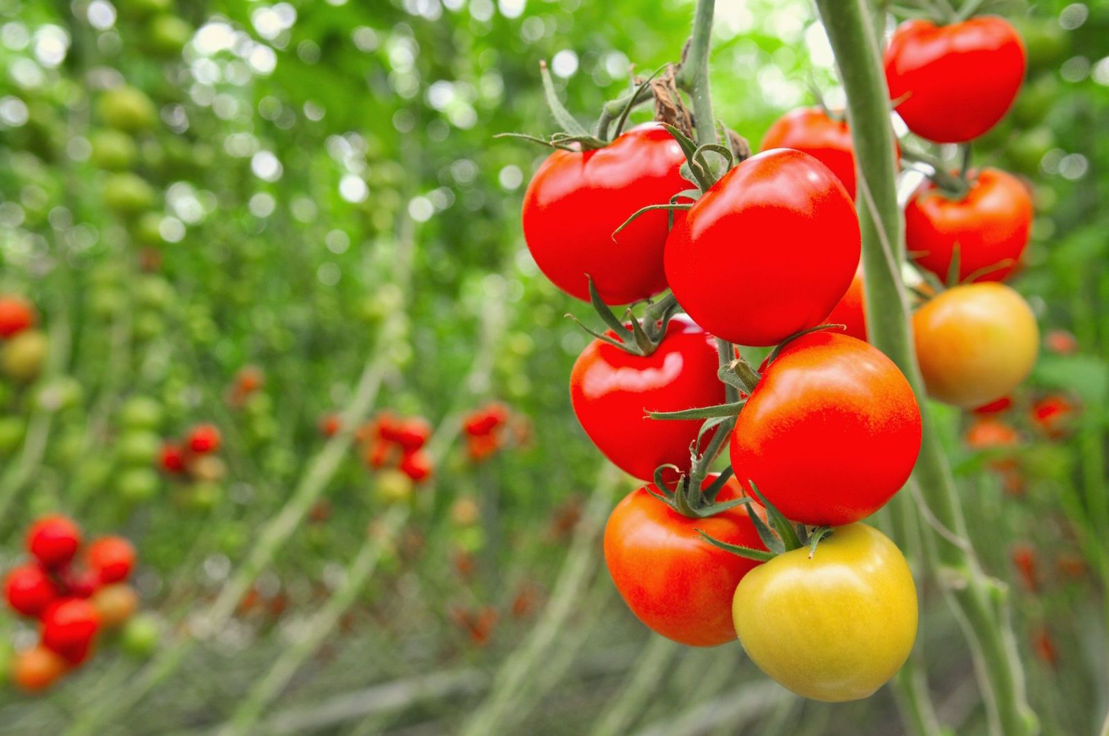 Here's the Easiest Way to Grow Tomato Seedlings