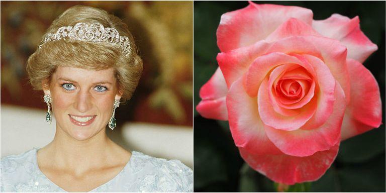 Flowers Named After Royals Princess Diana Roses