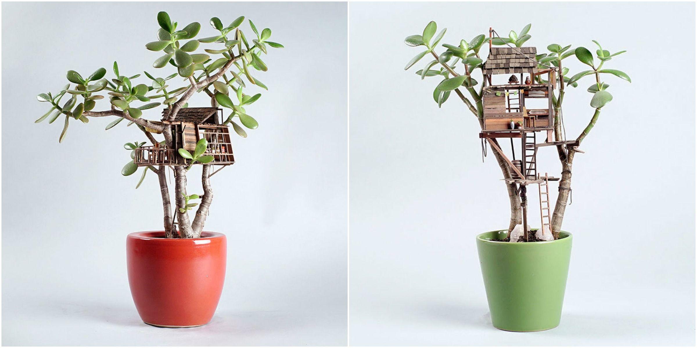 How to Grow Miniature Houseplants