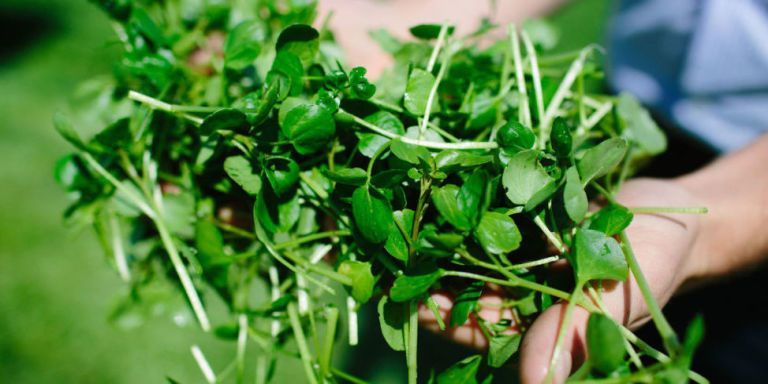 Here's Why Growing Watercress In Your Garden Is the Biggest New Trend