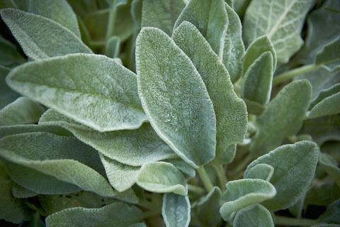 Deer Resistant Plants Plants That Deer Don T Eat