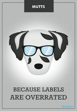Honest Dog Breed Slogans - Funny Slogans For Popular Dog Breeds