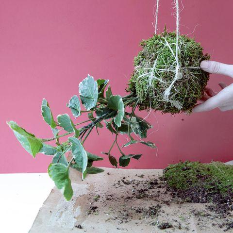 How to Make a Hanging Kokedama String Garden