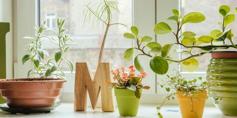 How to Revive a Dying Houseplant - How to Bring a Nearly