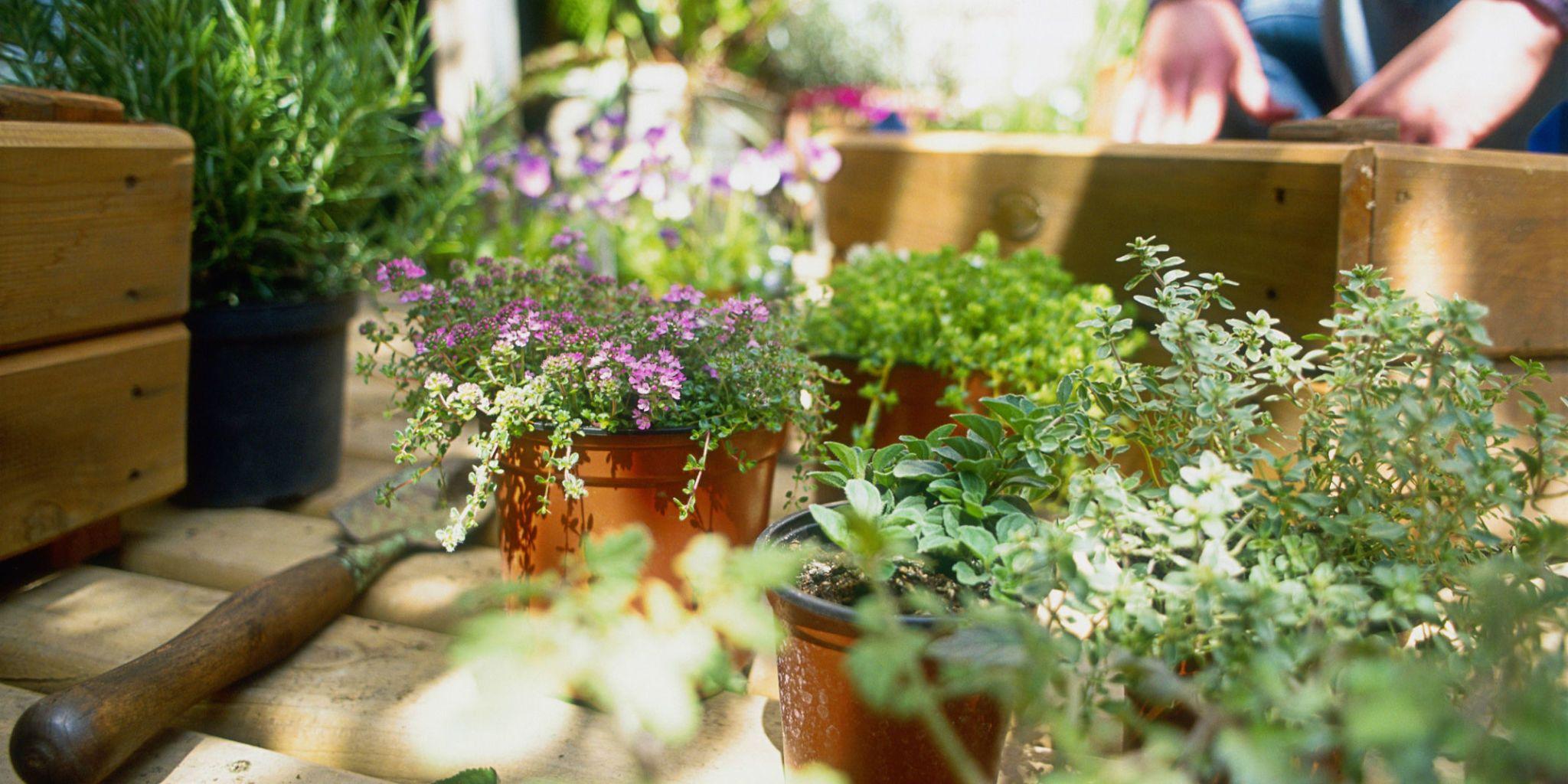 9 Gardening Diagrams Every Gardener Needs to Pin
