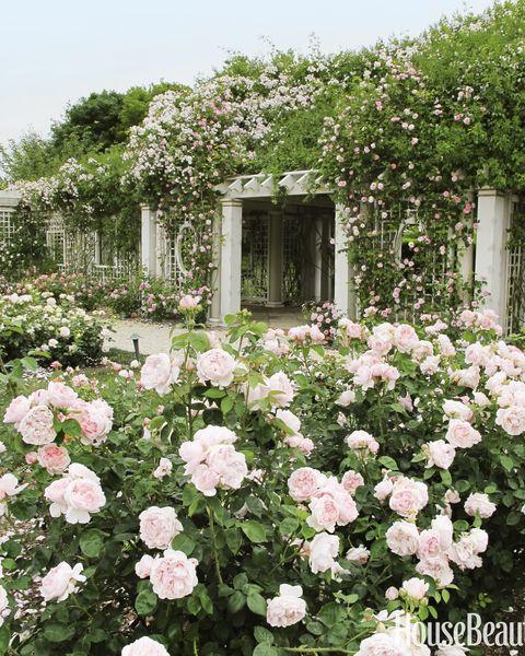 rose garden landscaping