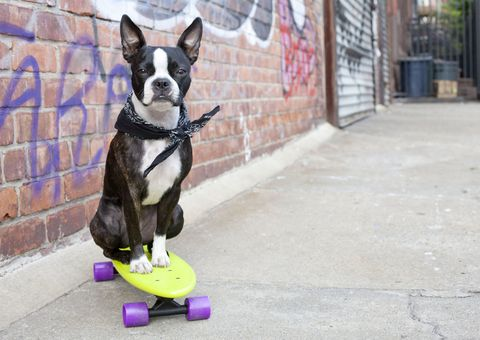 Cities for Dogs