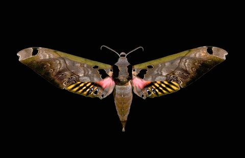 butterfly worlds ugliest color