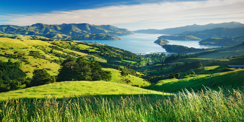 This New Zealand Town Is Basically Giving Away Houses